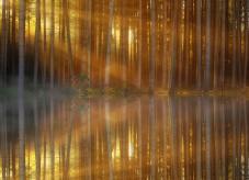 Goldenes Sonnenlicht fällt in einen Wald - Schäden im Wald vermeiden
