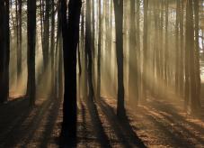 Das Licht der Morgensonne fällt in den Wald.