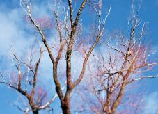 Eine teilweise verdorrte Baumkrone - Trockenheit im Wald