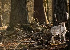 Wildlebende Säugetiere sind ein wichtiger Bestandteil unserer Natur. Doch sie können im Wald auch Schäden verursachen - Wildschäden vermeiden