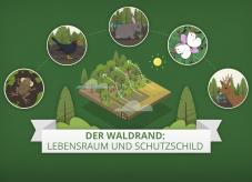 Der Waldrand: Lebensraum und Schutzschild