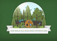 Der Wald als Kohlenstoffspeicher - Klimaschutz im Wald