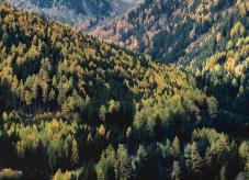 Ein vielfältiger Bergmischwald -Strukturvielfalt