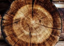 Rissiges Holz - Holzqualität und Sortierung