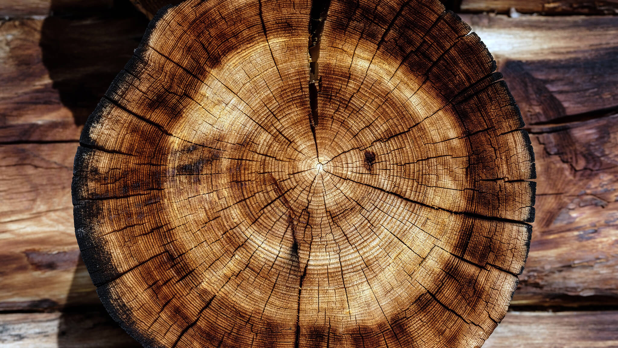 Holzqualität und Holzsortierung   Alle Grundlagen auf Waldhilfe.de
