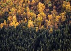Nadelwald und Mischwald direkt nebeneinander - Waldbau