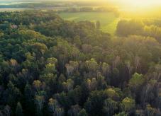 Ein Wald in der Sonne - Waldpflege