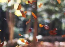 Herbstlaub im Wald - Wald vererben