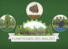 Funktionen des Waldes - Waldfunktionen