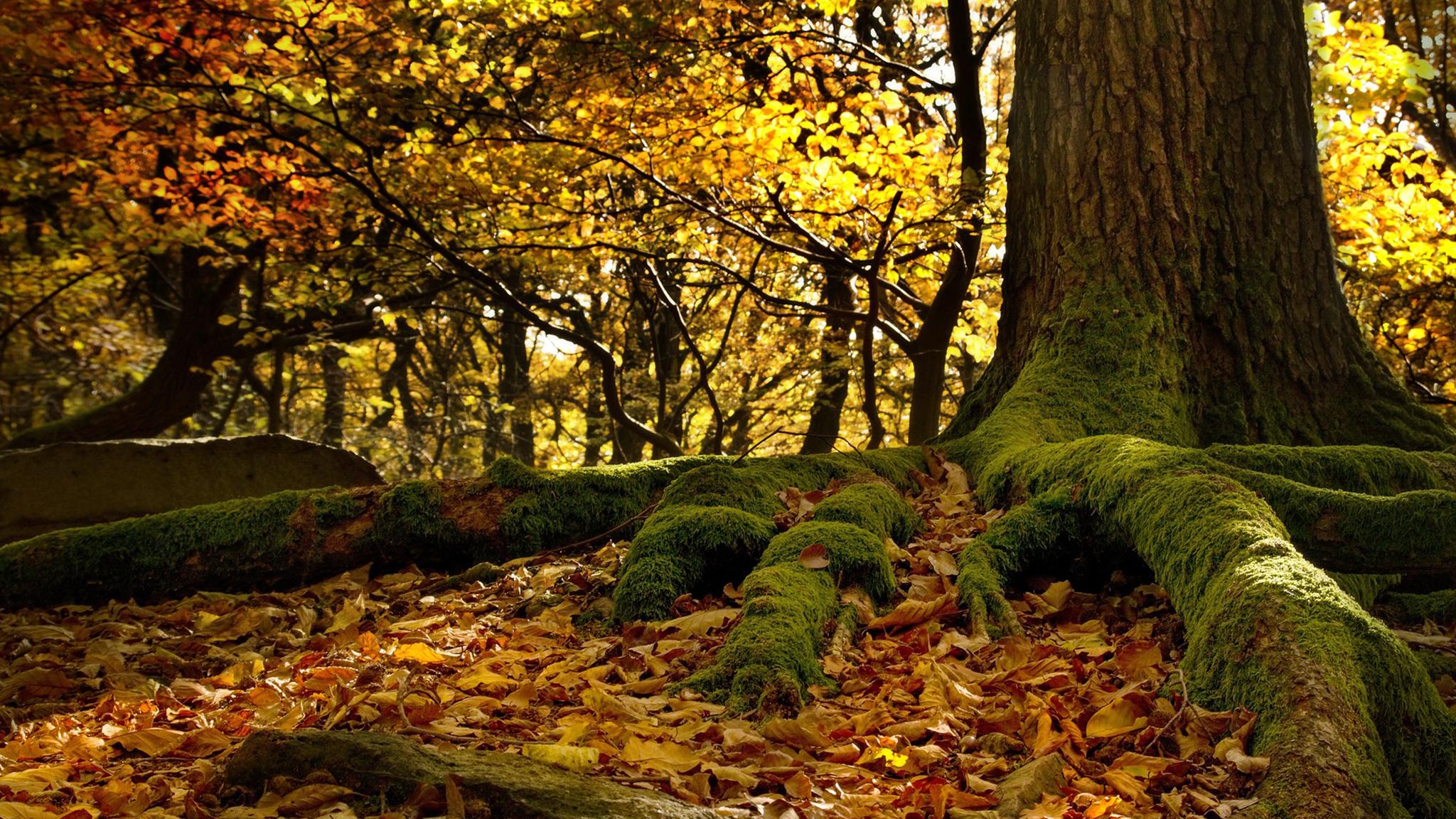 Gibt Es Echten Urwald In Deutschland Www Waldhilfe De