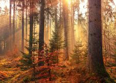 Waldumbau - Vom Nadelwald zum Mischwald