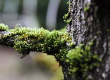 Wertastung auf Waldhilfe