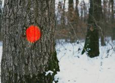 Auszeichnen von Bäumen auf Waldhilfe