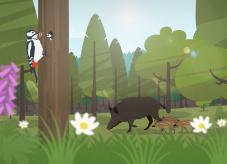 Waldkalender: Frühling im Wald