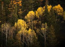 Naturnaher Waldbau auf Waldhilfe