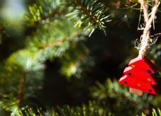 Weihnachtsbaum kaufen 2019