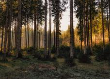 Förderung Waldschutz