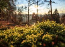 Standort Wald: Der Boden hat entscheidenden Einfluss