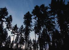 Ein Wald in der Dämmerung - Wald verkaufen