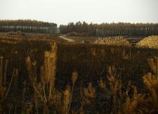 Waldbrandfläche in Treuenbrizten