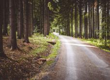 Walderschließung - Wegebau Waldweg Groberschließung