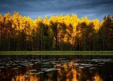 Ein Wald spiegelt sich im Wasser - Waldland Deutschland