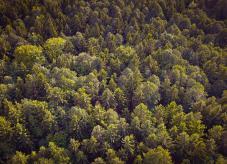 Waldbegriff: Was ist Wald