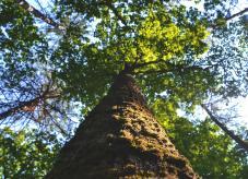 Z-Bäume: Zukunftsbäume auf Waldhilfe